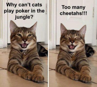 Cheetahs!