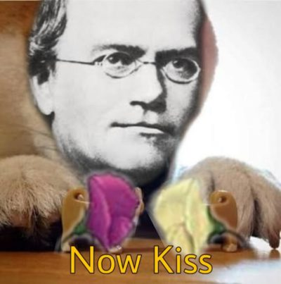 Papa Mendel discovers the fundamentals of genetics. 1856-1863