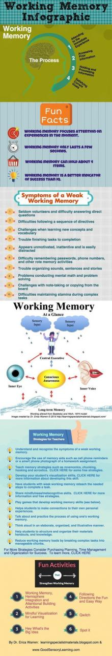 Working Memory: An Infographic