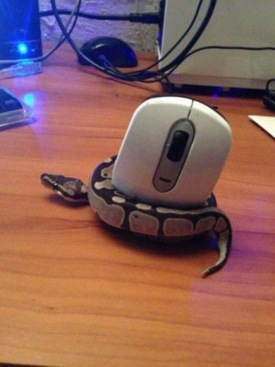 controlling the mouse using python