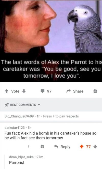 Cursed parrot