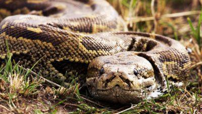 Mods are asleep, upvote python