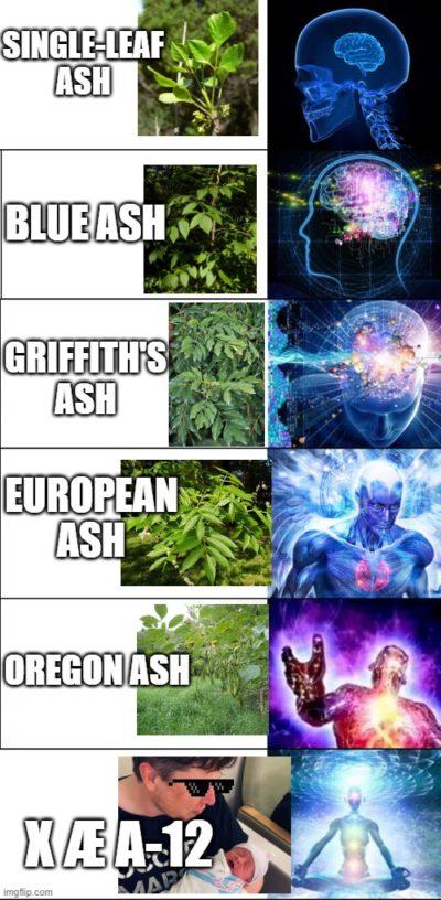 Elon's Ash