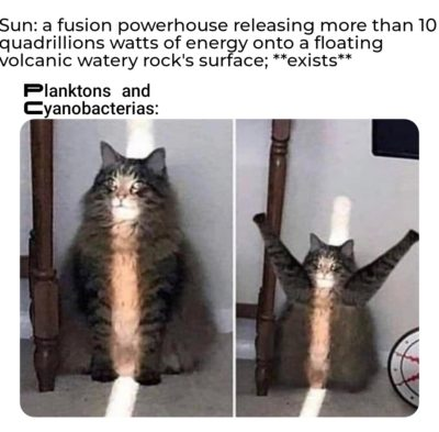 Cat Fusion Earth (my first meme here😁, selfmade)