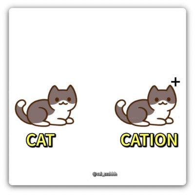 A cute-ion, actually.